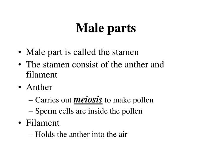 Male parts