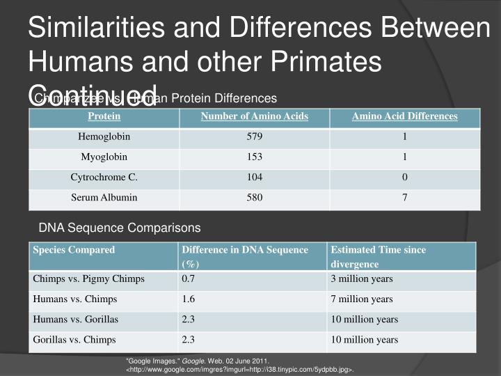 Similarities and Differences Between Humans and other Primates Continued