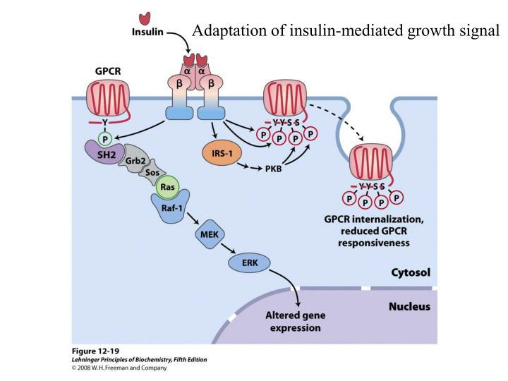 Adaptation of insulin-mediated growth signal