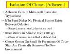isolation of clones adherent