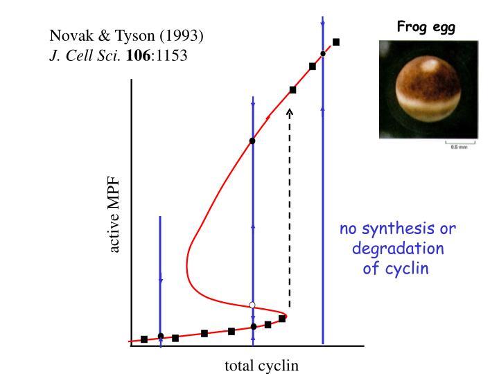 Frog egg
