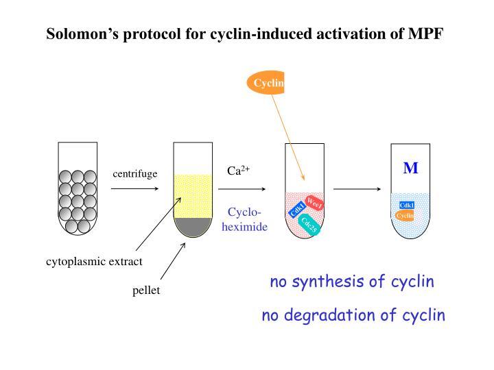 Cyclin