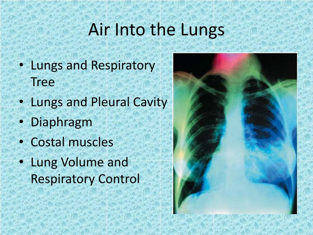 air into the lungs l.