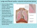 lungs and pleural cavity visceral and parietal pleura