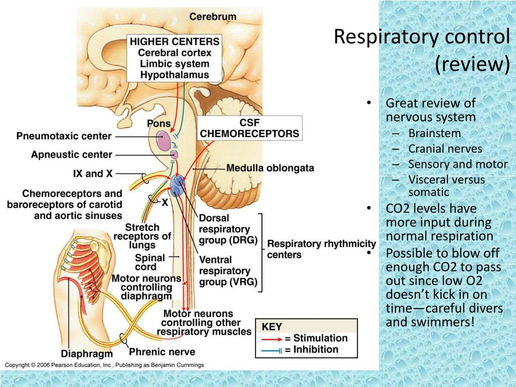 Respiratory control
