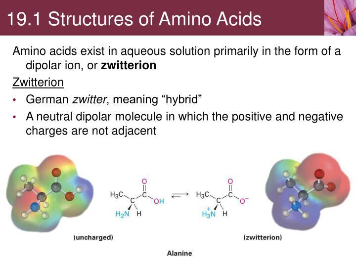 19.1 Structures of Amino Acids