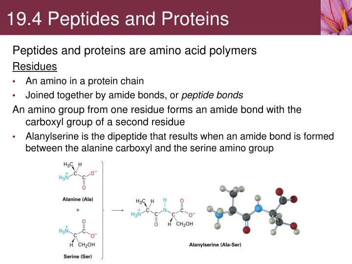 19.4 Peptides and Proteins