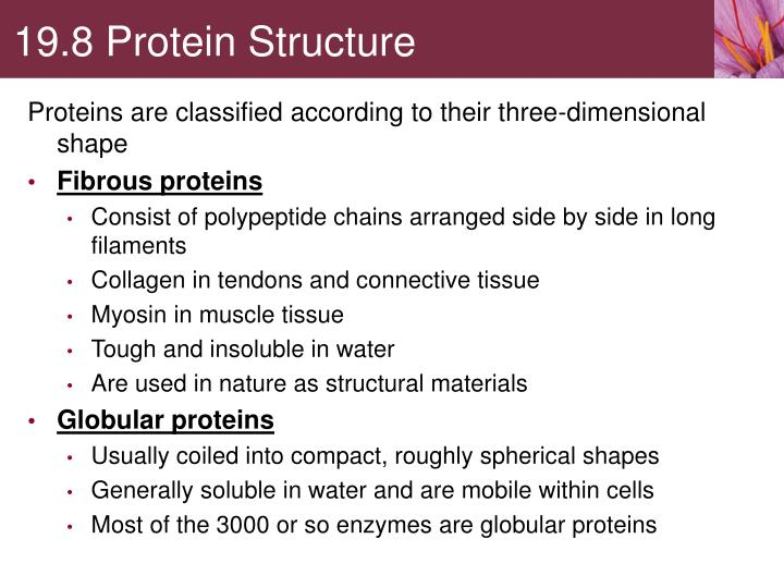 19.8 Protein Structure