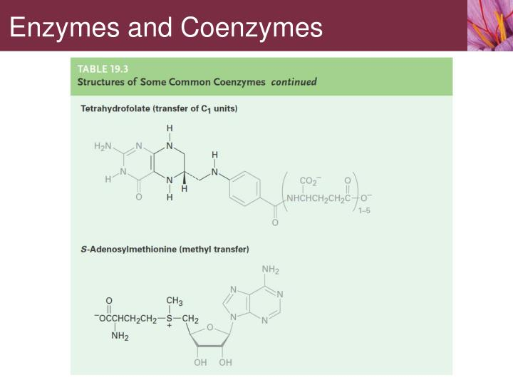 Enzymes and Coenzymes