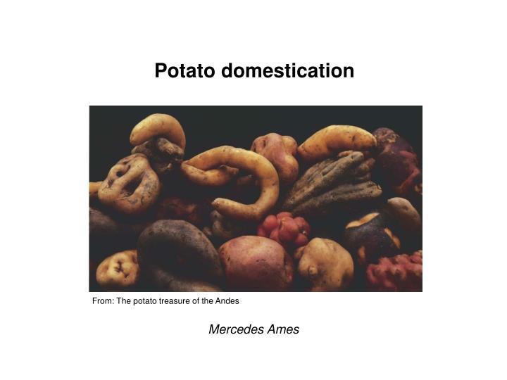 Potato domestication