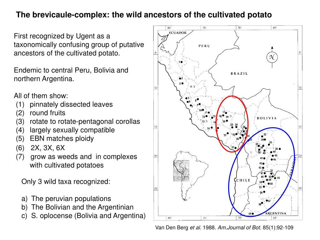 The brevicaule-complex: the wild ancestors of the cultivated potato