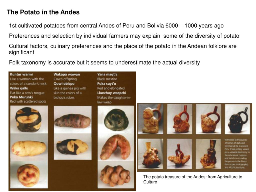 The Potato in the Andes