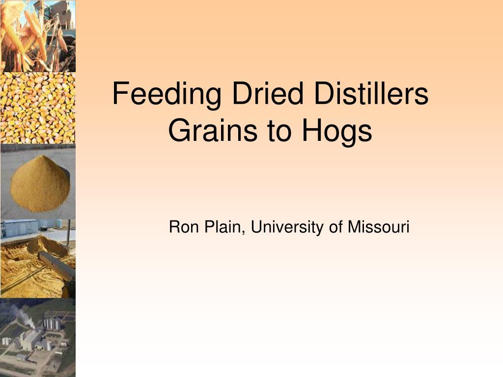 feeding dried distillers grains to hogs l.