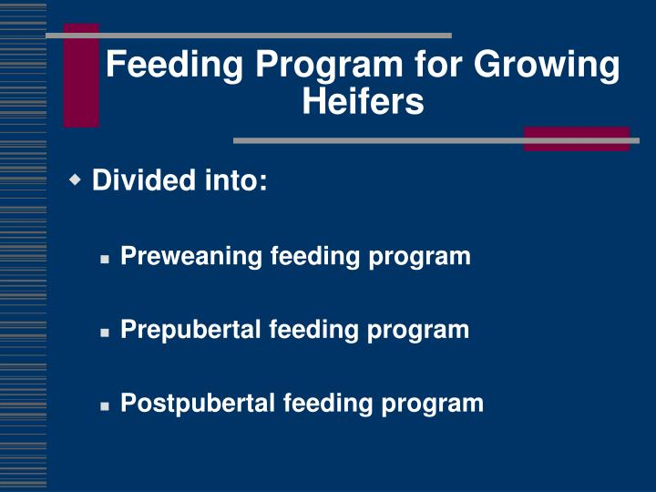 Feeding program for growing heifers