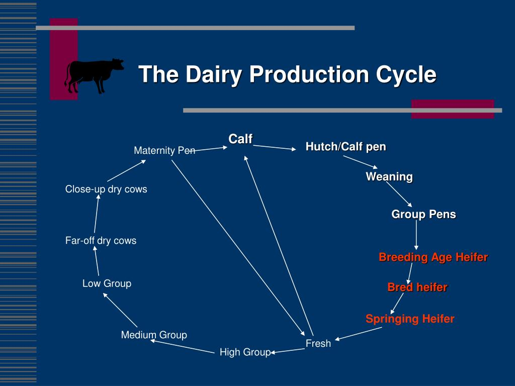 The Dairy Production Cycle