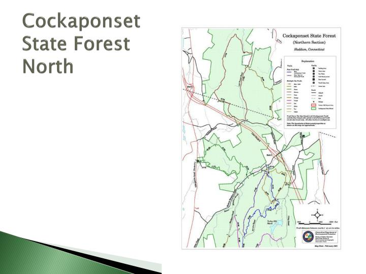 Cockaponset state forest north