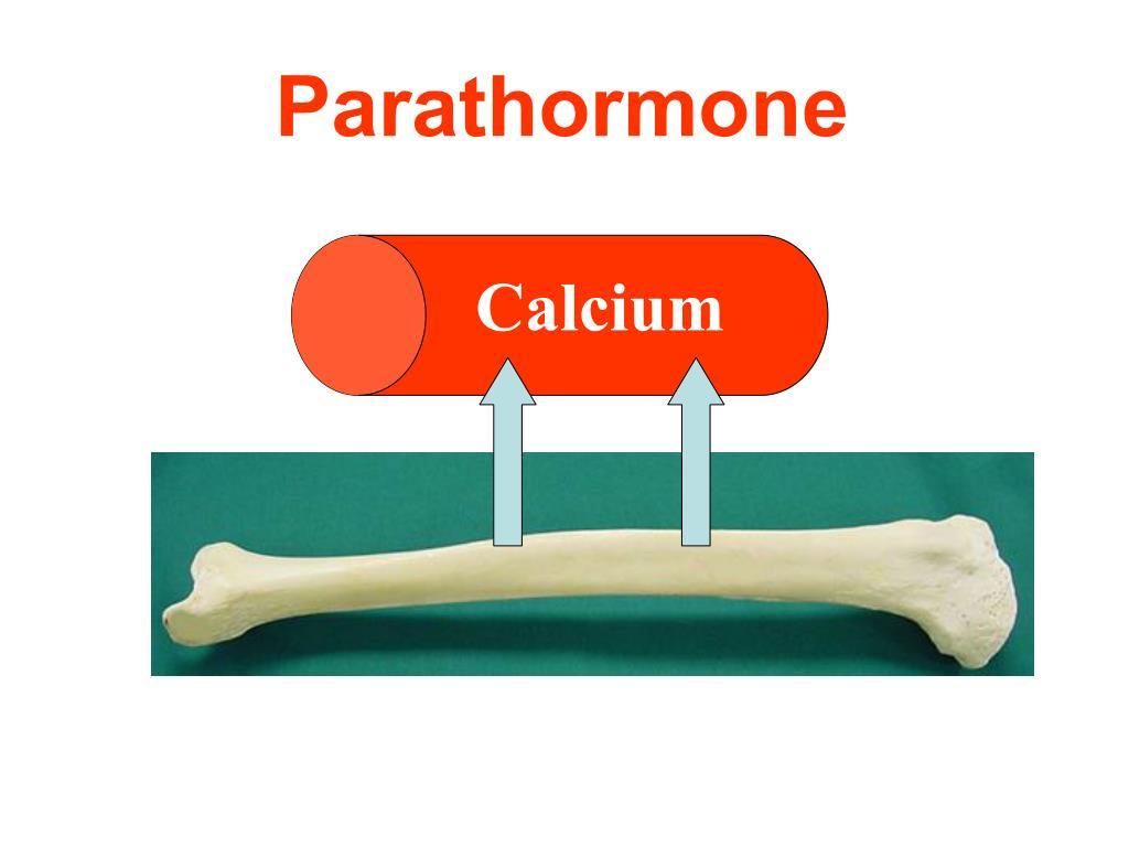 Parathormone