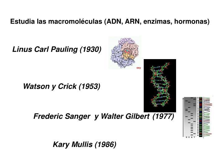 Estudia las macromoléculas (ADN, ARN, enzimas, hormonas)
