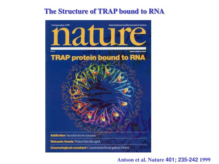 The Structure of TRAP bound to RNA
