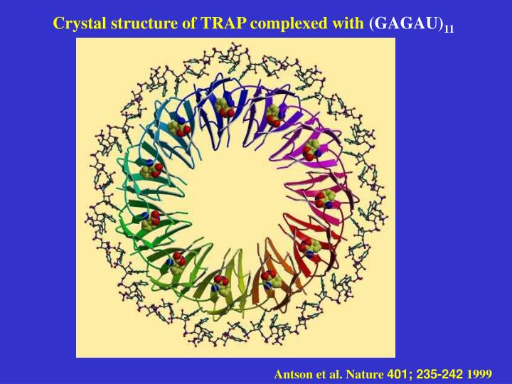 Crystal structure of TRAP complexed with