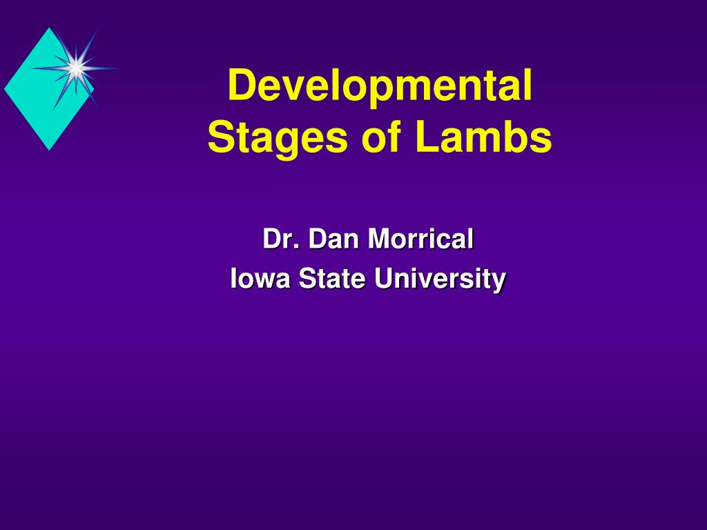 developmental stages of lambs l.