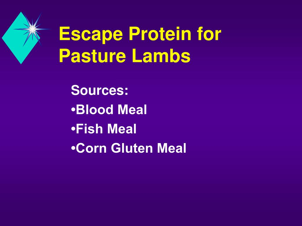 Escape Protein for Pasture Lambs