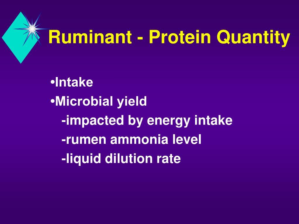Ruminant - Protein Quantity
