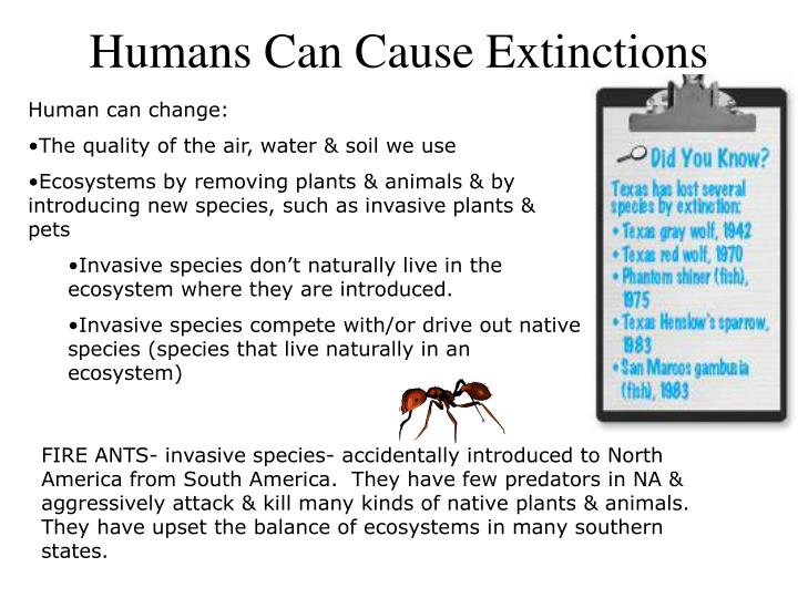 Humans Can Cause Extinctions