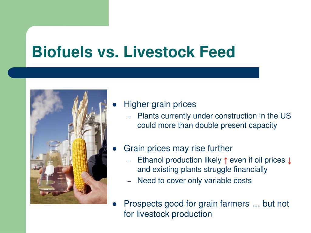 Biofuels vs. Livestock Feed