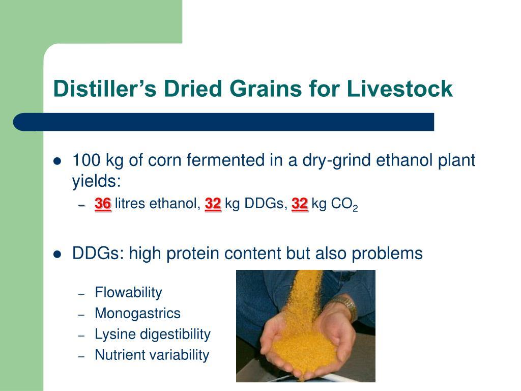Distiller's Dried Grains for Livestock