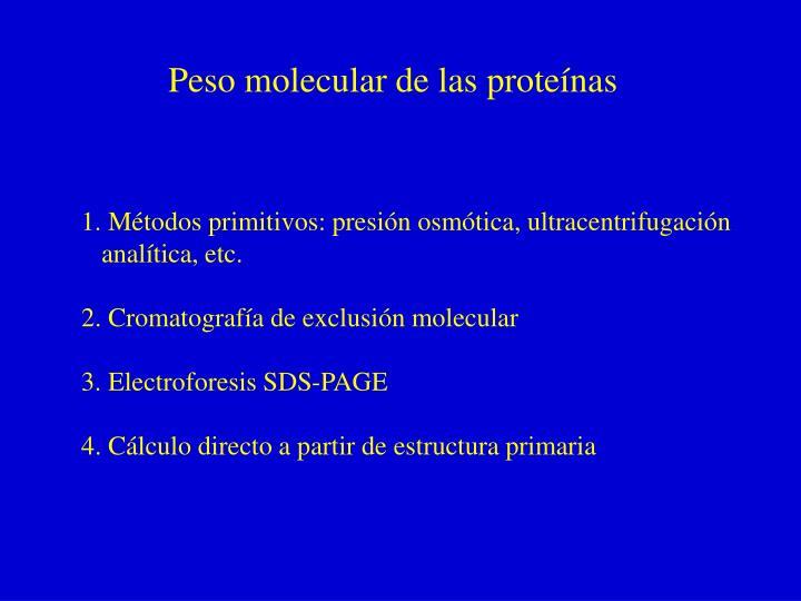 Peso molecular de las proteínas