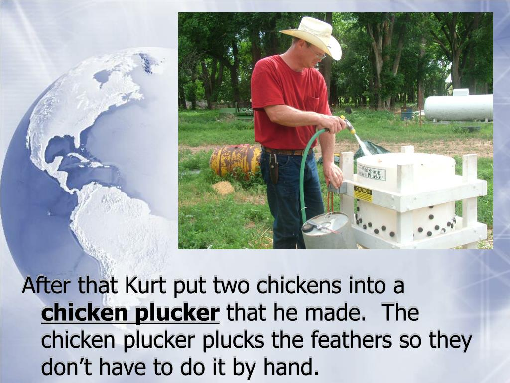 After that Kurt put two chickens into a