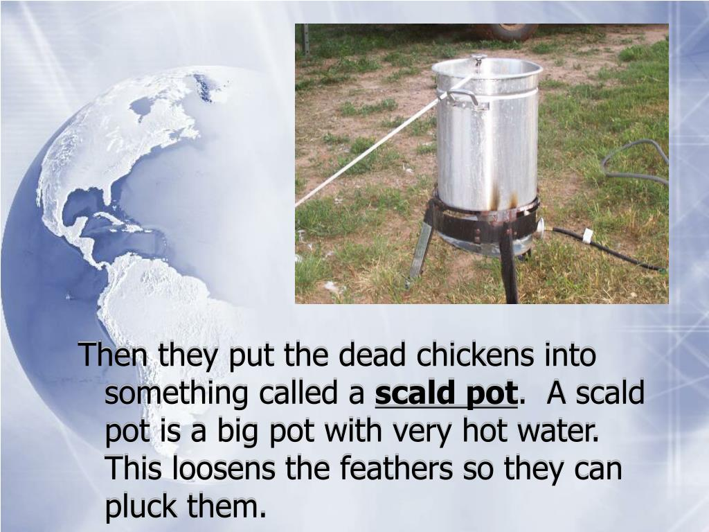 Then they put the dead chickens into something called a