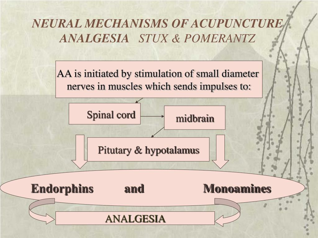 NEURAL MECHANISMS OF ACUPUNCTURE ANALGESIA