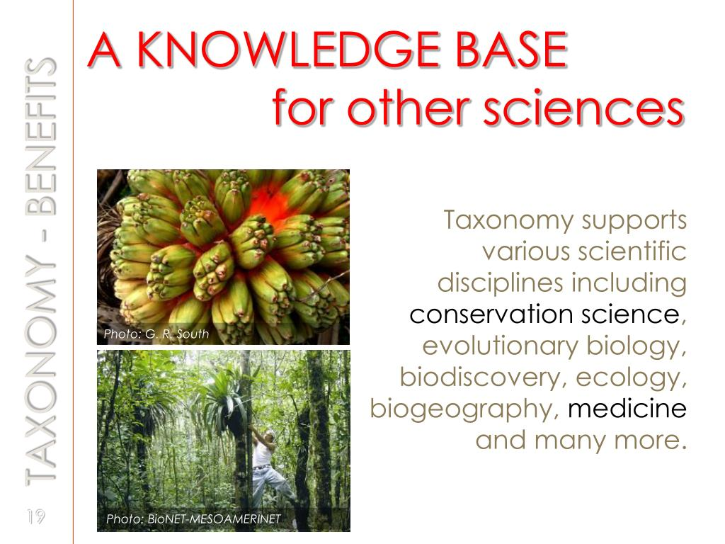 A KNOWLEDGE BASE