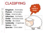 classifying
