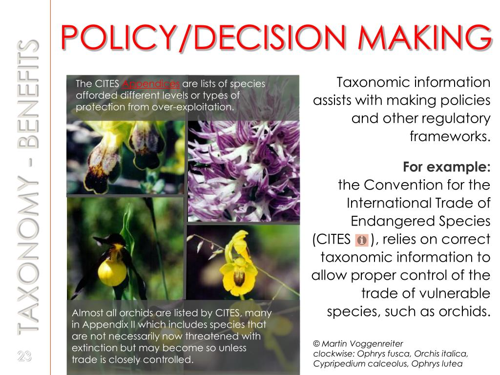 POLICY/DECISION MAKING