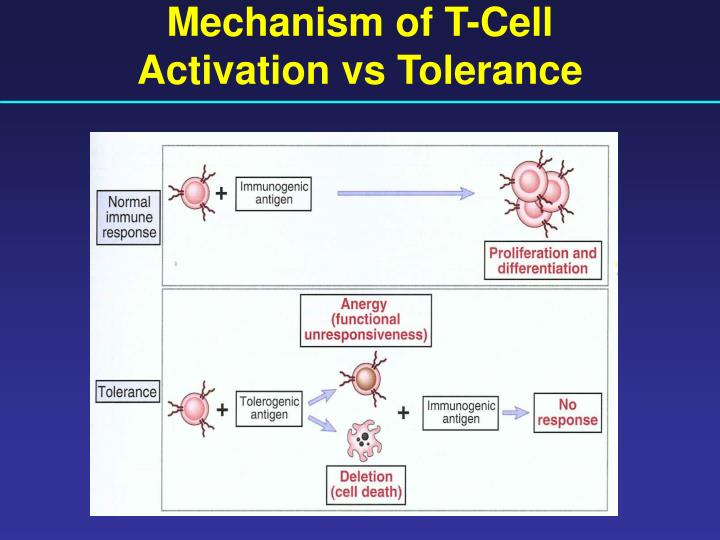 Mechanism of T-Cell
