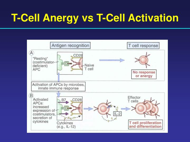 T-Cell Anergy vs T-Cell Activation