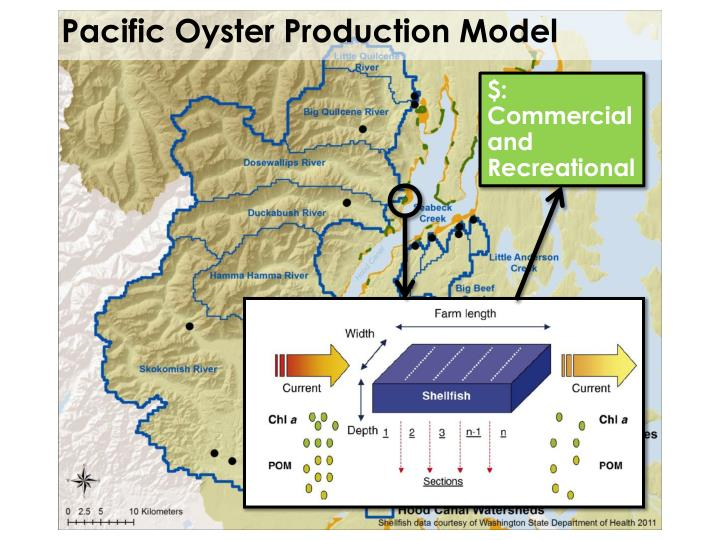 Pacific Oyster Production Model