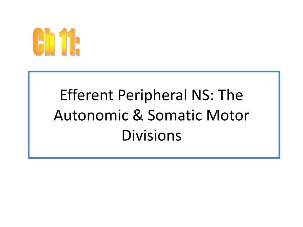Ppt Efferent Peripheral Ns The Autonomic Somatic Motor