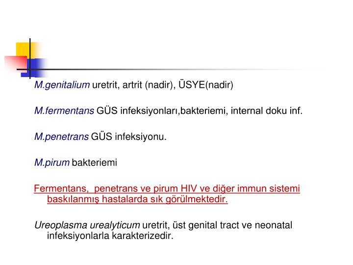 M.genitalium