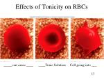 effects of tonicity on rbcs