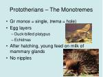 prototherians the monotremes