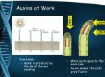 auxins at work