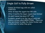 single cell to fully grown