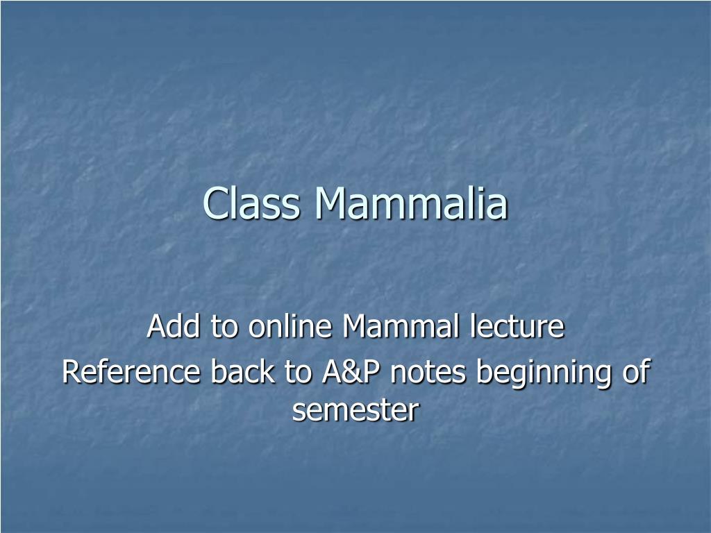 class mammalia l.