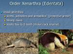 order xenarthra edentata