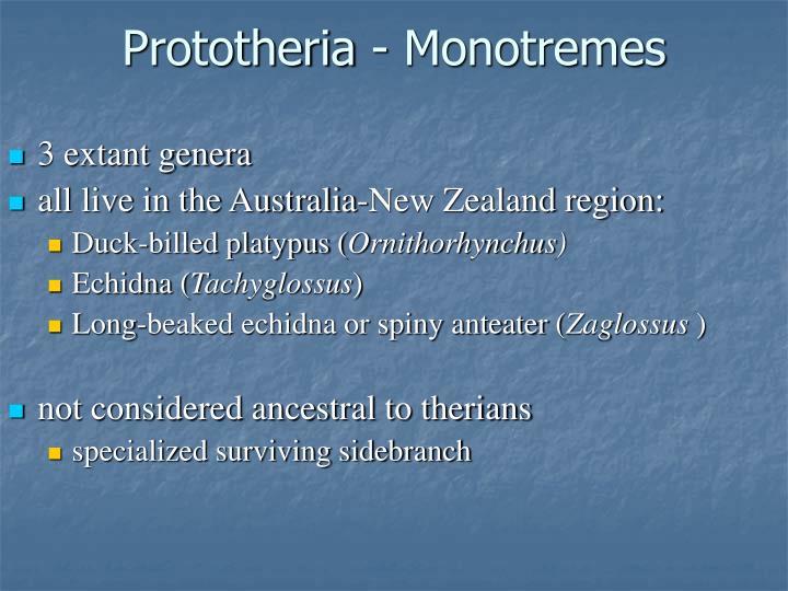 Prototheria monotremes