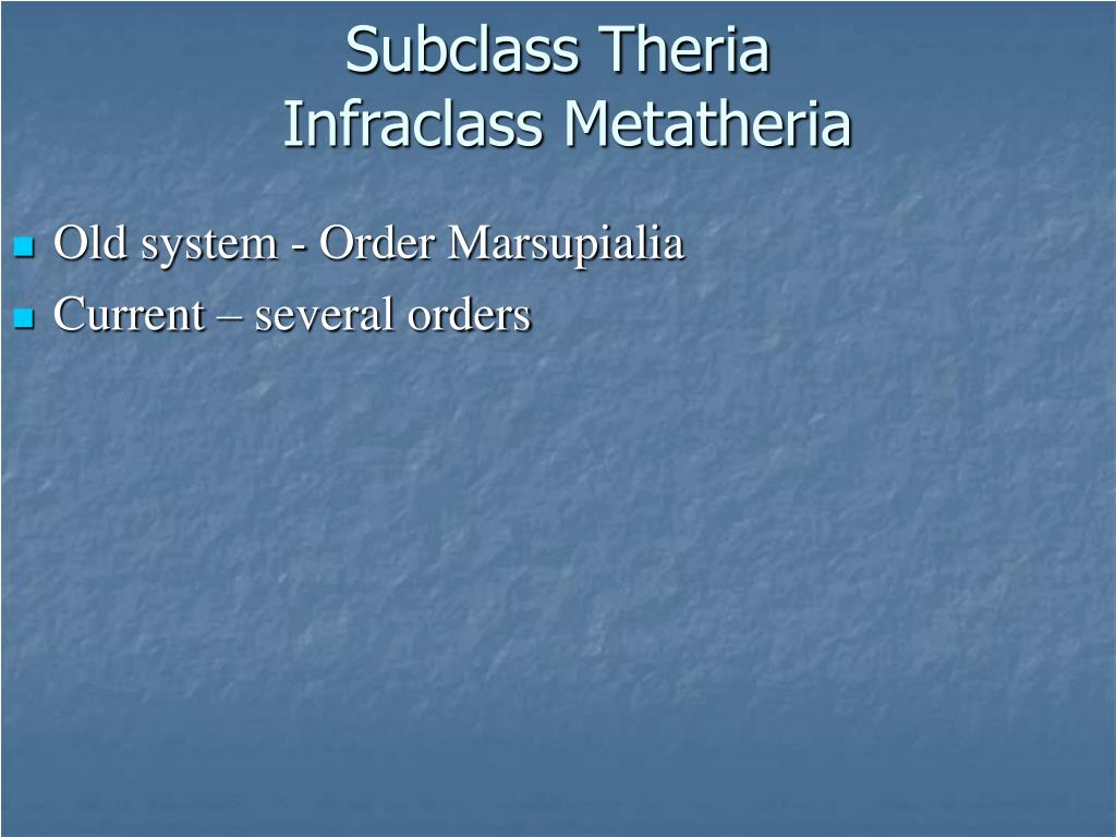 Subclass Theria